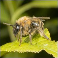 Jordbier og Bier
