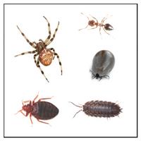 Kravlende insekter