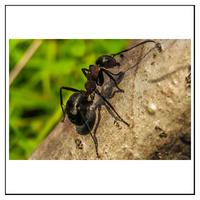FAQ om Myrer og hvordan du slipper af med dem