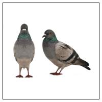 Skræmmere mod Fugle