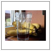 Sådan bekæmper du bananfluer i hjemmet