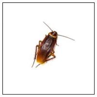 Kakerlakker