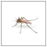 Skræmmere mod Myg