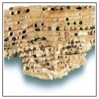 Træødelæggende insekter