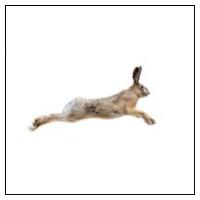 Skræmmere mod Hare