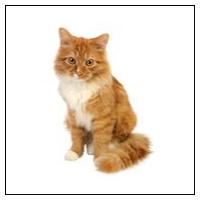 Kattelopper