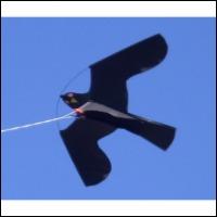 Rovfugle drage system