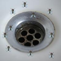 Sommerfuglemyg (små fluer)