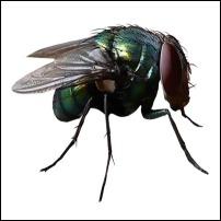 Stueflue miljøvenlig fluefælde