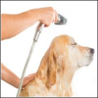Hunde shampoo