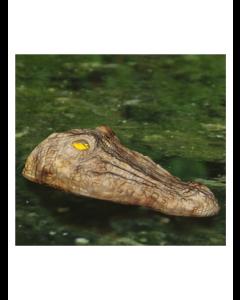 Flydende krokodille hoved til dam og sø