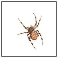Bekæmp selv edderkopper