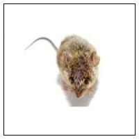 Skræmmer mod mus
