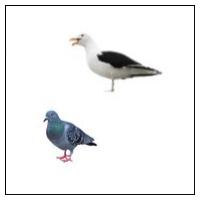 Skræmmer mod fugle
