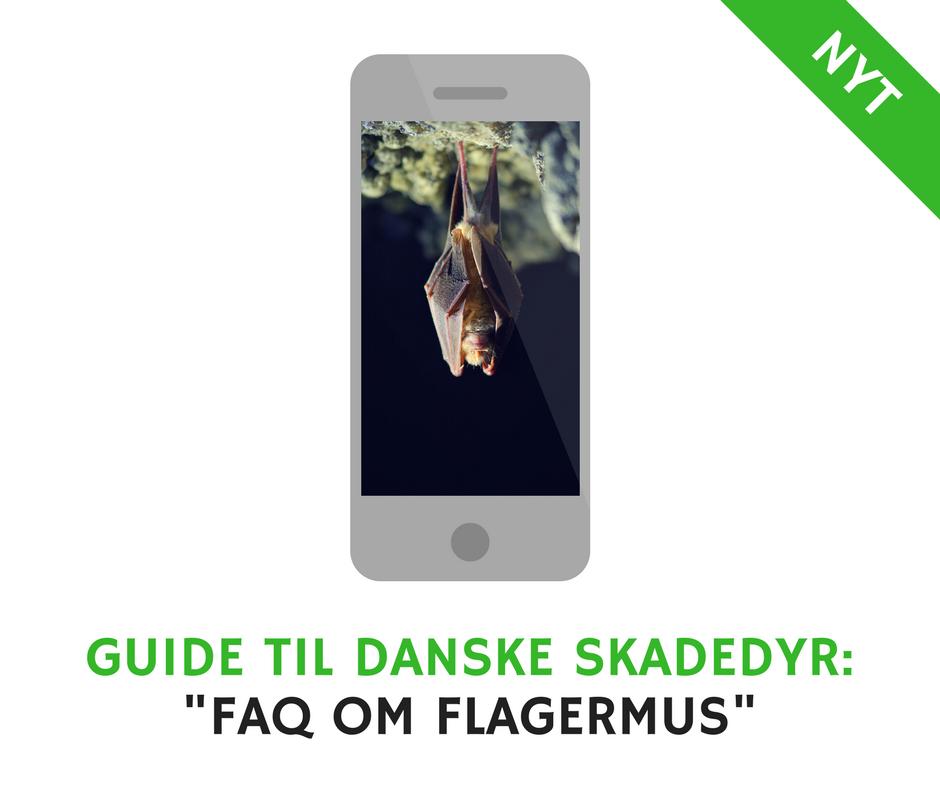 FAQ om Flagermus