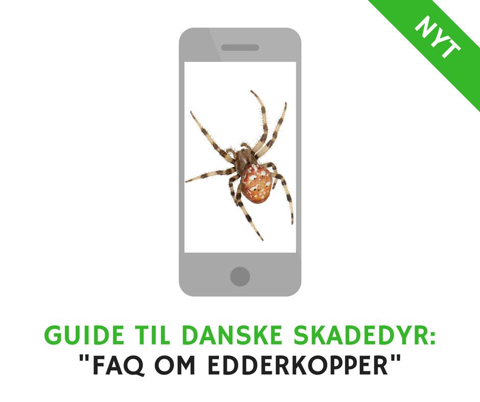 hvor mange edderkopper spiser man i aret
