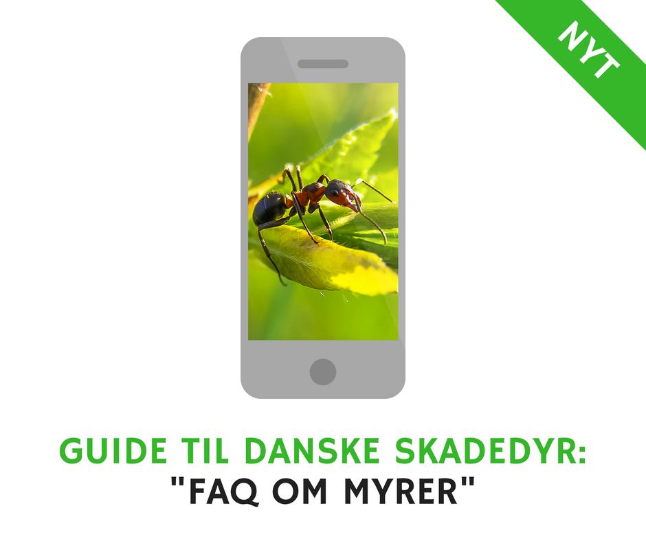 FAQ om Myrer